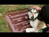 Собака плачет над могилой хозяйна