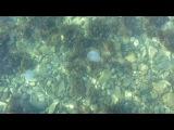 Медузы.Большой Утриш.